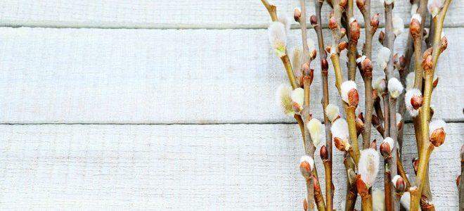 Ohlášky Květné neděle